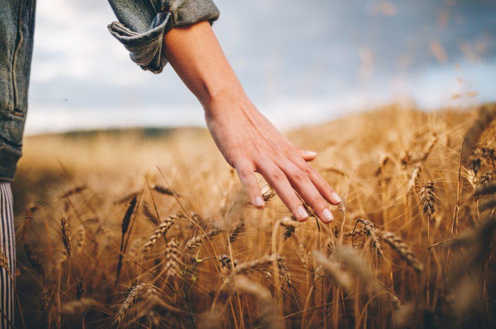 Landwirtschaft als Grundlage für ein gesundes Leben